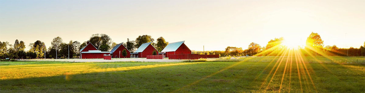 Sun Shining on Barn and Pasture